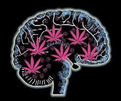afectaciones de la cannabis en el cerebro