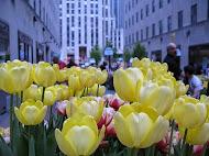 Spring NYC