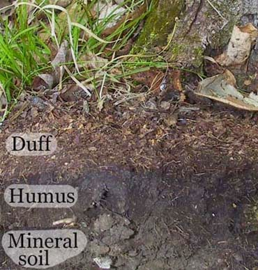 Earth 39 s internet natural networking global weirding for What does soil come from