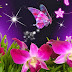 Wallpaper violet orchids and beautiful butterfly
