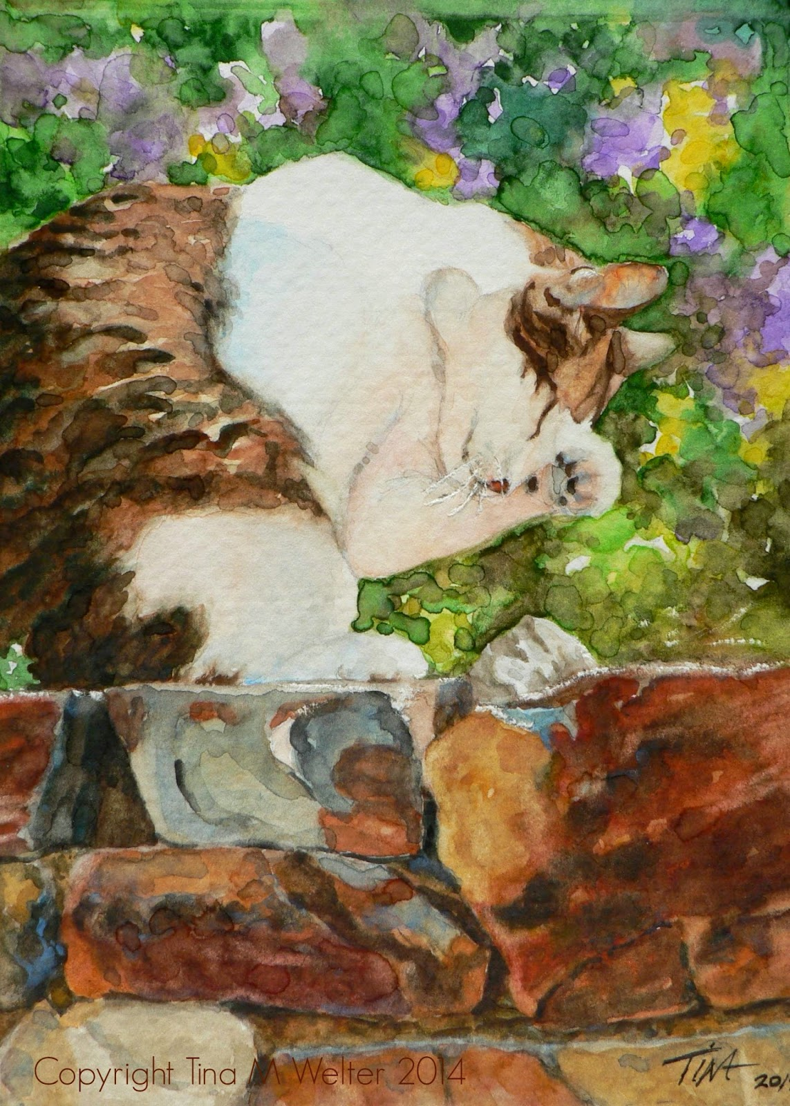 Charming brown and white cat, washing her face on the garden wall in Dresden, Germany