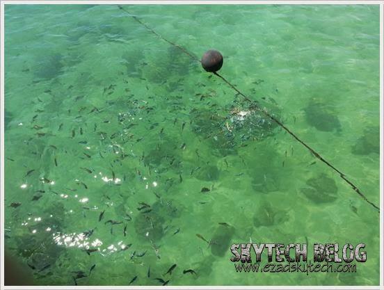 Ikan di Jeti Pulau Manukan