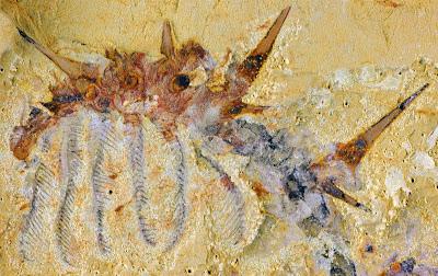 paleo invertebrata