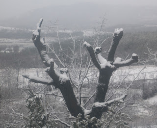 The Oak Tree shows its snow-load off