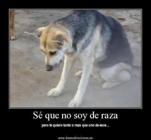 No fomentes la venta de perros de raza...