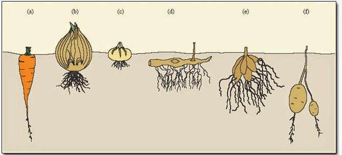 les poissons n 39 existent pas petit guide de la r sistance au froid partie 2 les plantes. Black Bedroom Furniture Sets. Home Design Ideas