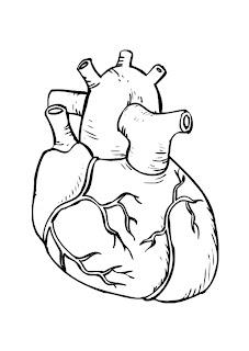 Semiología cardiovascular - grandes síndromes caridiovasculares