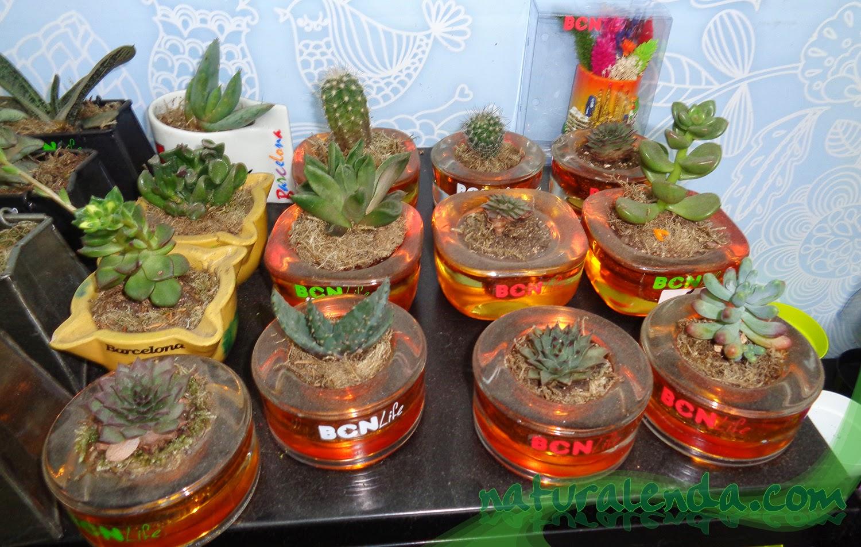 plantas en ceniceros