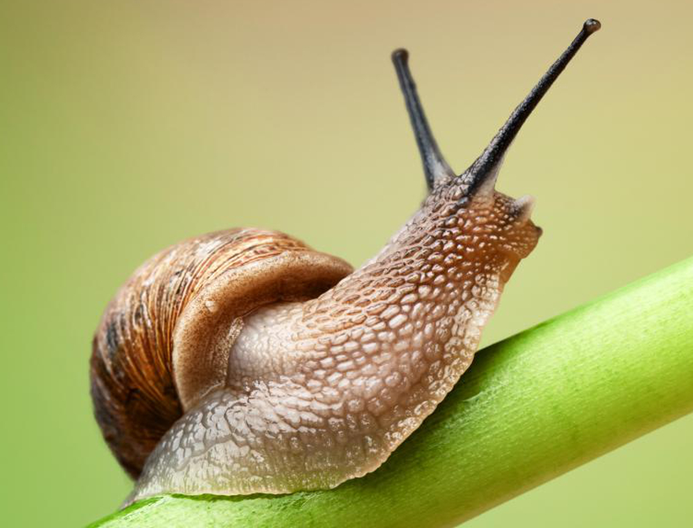 Fortunately, there are many options available - natural and otherwise - to get rid of snails from your garden.