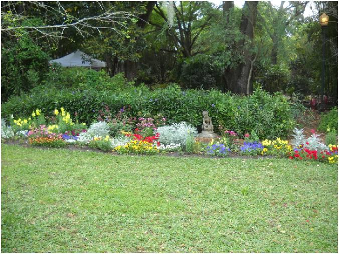 Vida a lo verde living in green ideas de plantas que for Plantas en jardines pequenos