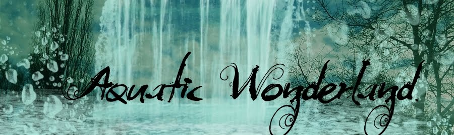 Aquatic Wonderland