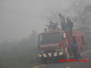 Important Result Forest Fire