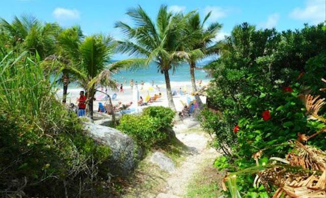 vegetacao praia
