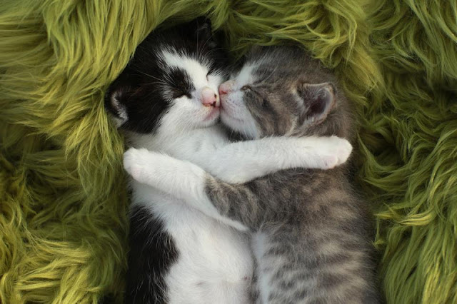 Two little kittens hugging and sleeping together