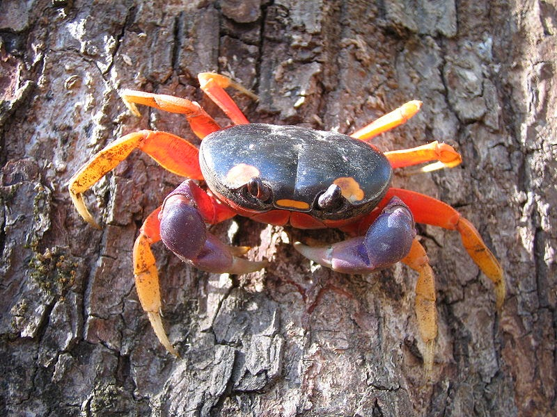 Fun Facts About Crabs | KnowLedge