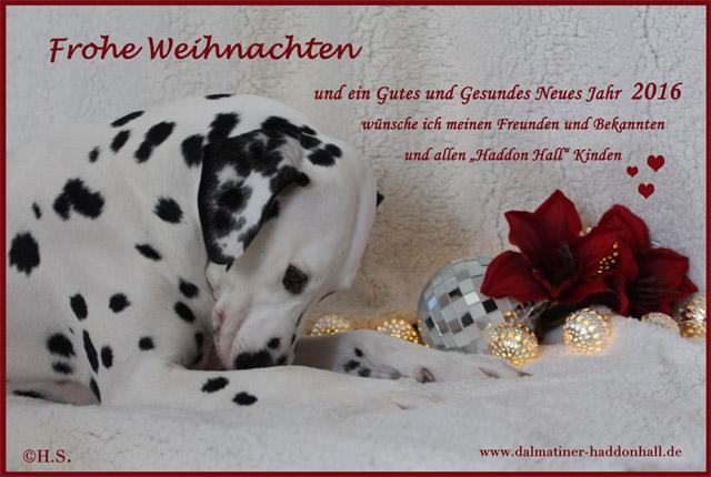 Dalmatiner of Haddon Hall: Happy Birthday und Frohe Weihnachten!