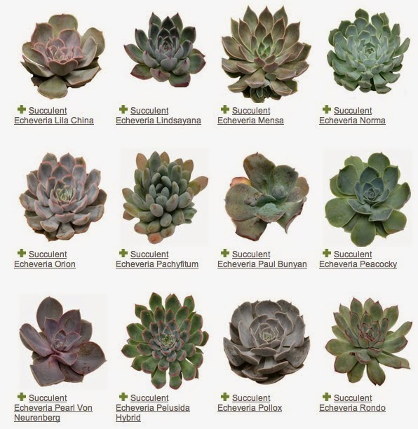 succulent resource