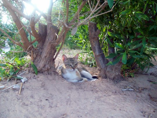 Djerba Beach cat