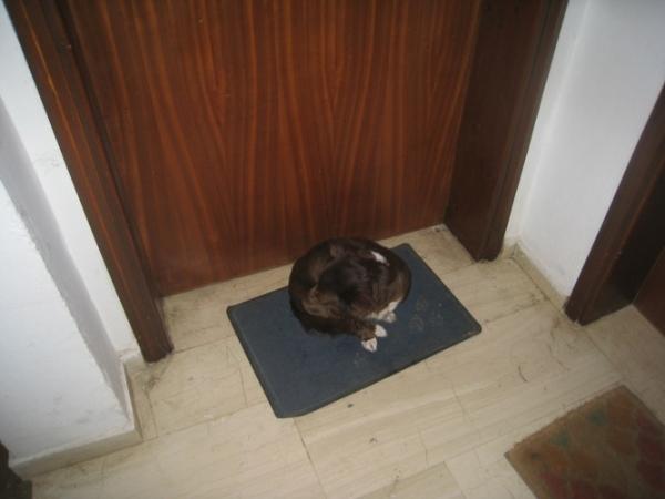 Χανιά εγκατάλειψη σκύλου