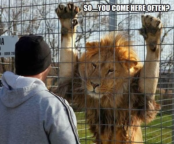 Funny Zoo Meme : Funny animal captions part pics amazing