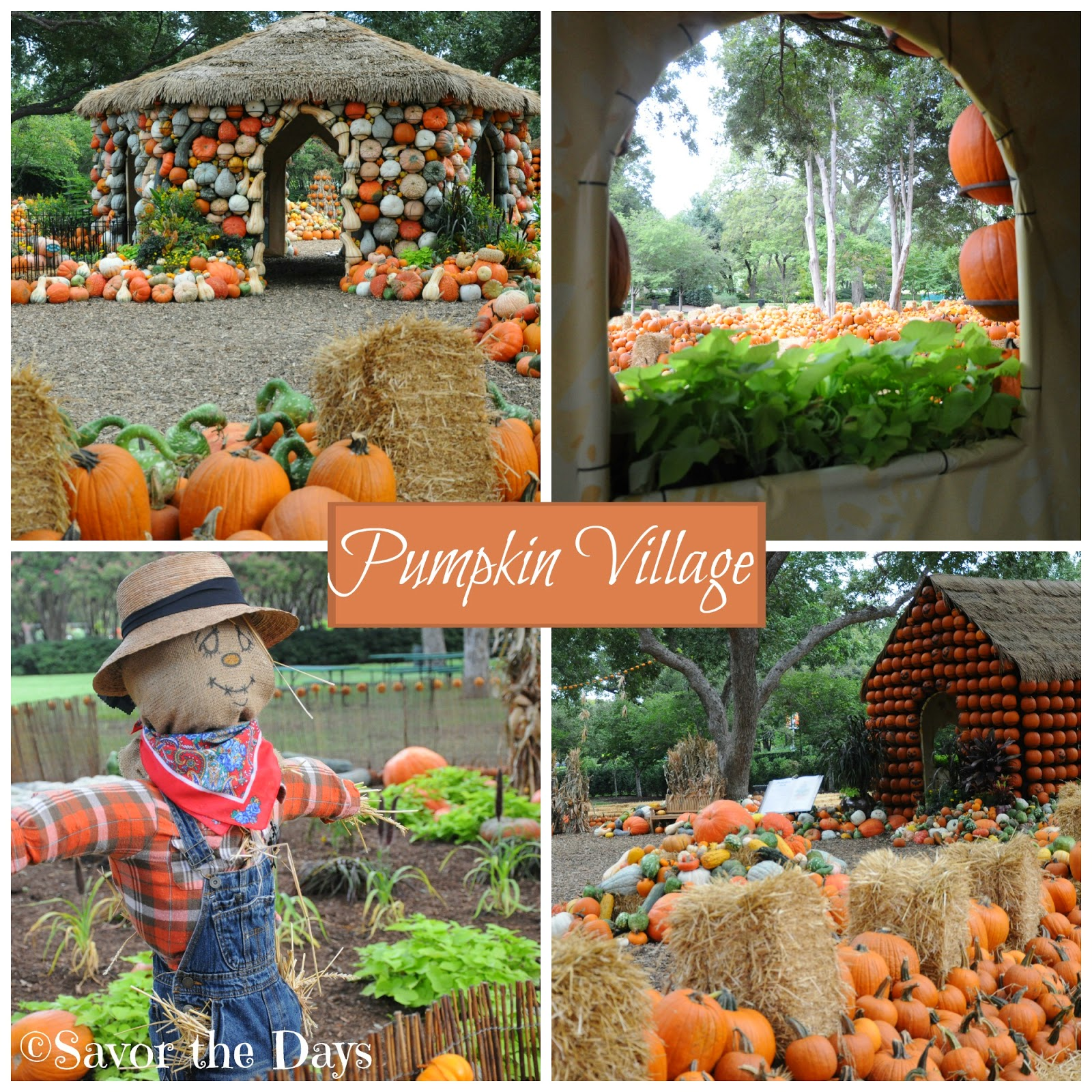Pumpkin Village at the Dallas Arboretum