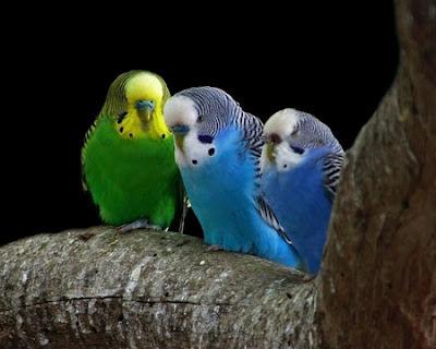 Los pájaros, alegre compañía