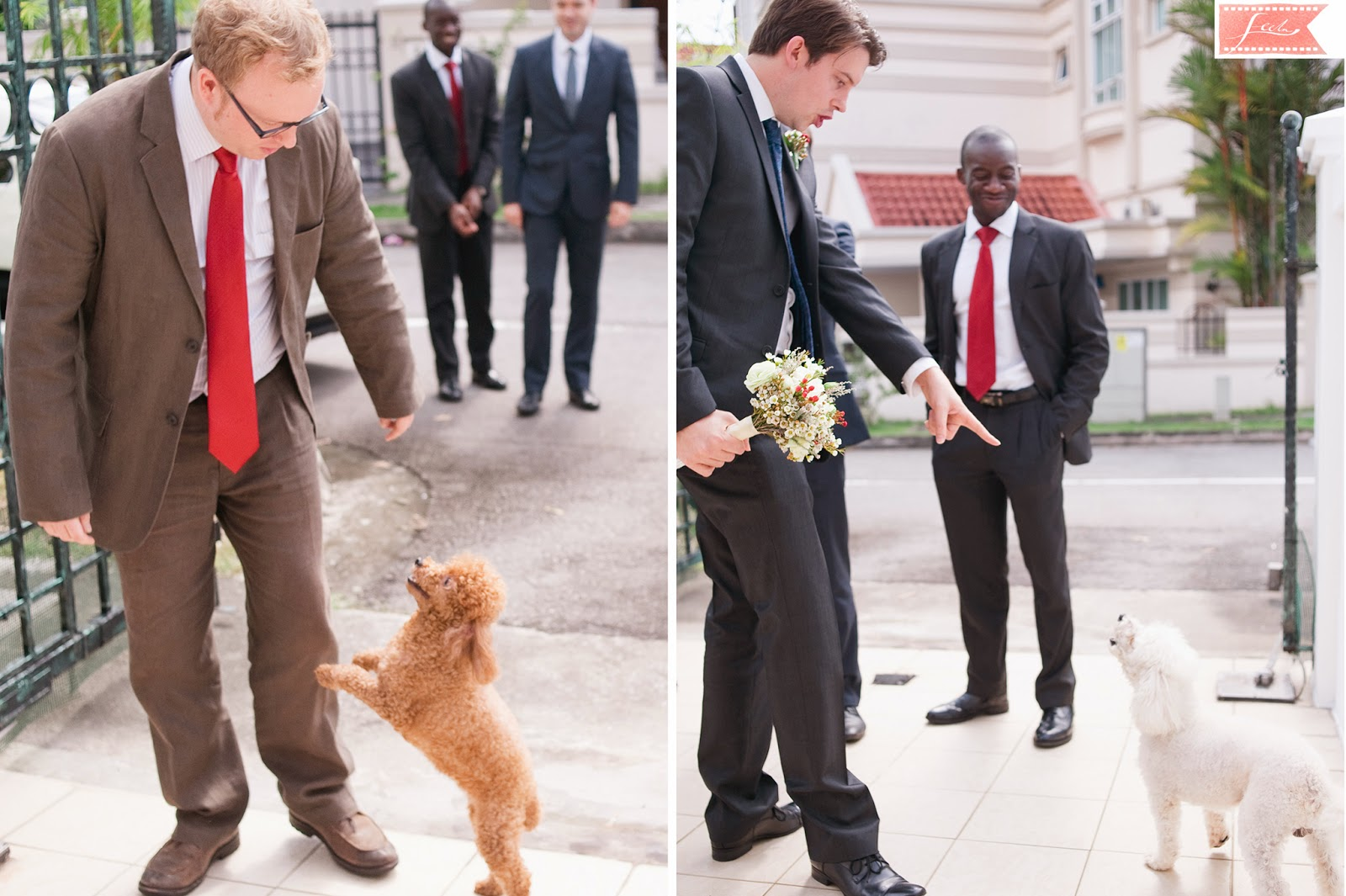 groom groomsmen fetch the bride dogs feelm