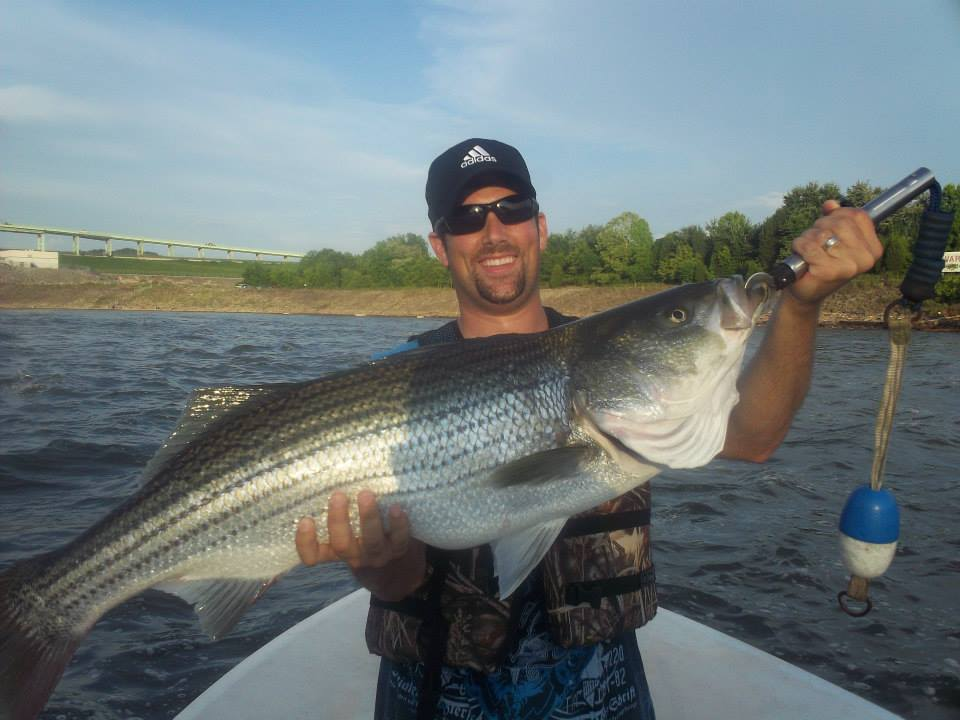 Fish on guided tours knoxville tn knoxville tennessee for Striper fishing tips
