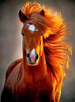 Foto caballo al aire libre