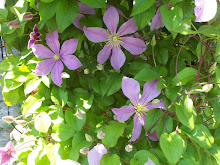 Clematis at Eileen's