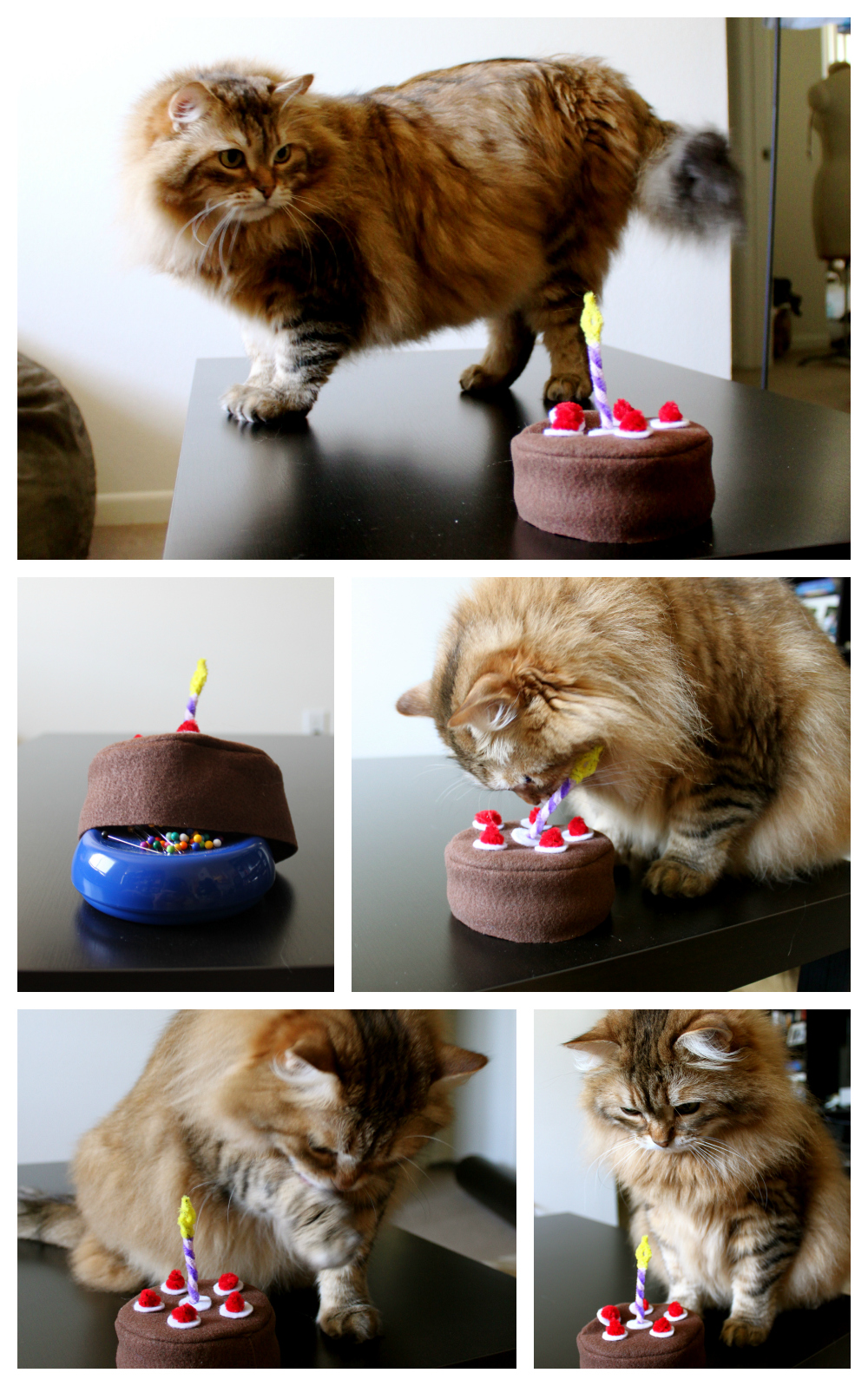 Cats don't know what to do with birthday cake.