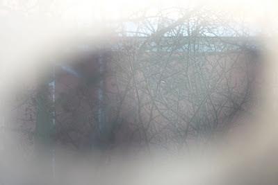 """igenimmad ruta, närbild på """"titthål"""" . foto: Reb Dutius"""