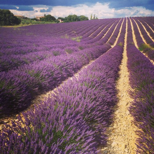 PROVENCE ♥