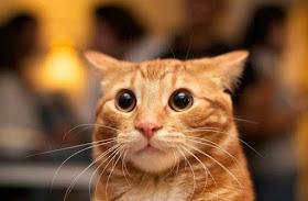 WOW! - Etwas GROSSES ist passiert!!! - 30. Juli 2018 - Schrödinger's Öther Cat