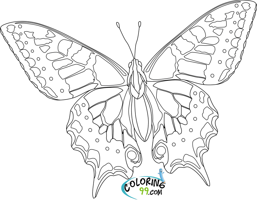 coloring pages detailed butterfly - photo#31
