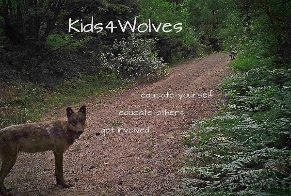 Kids4Wolves