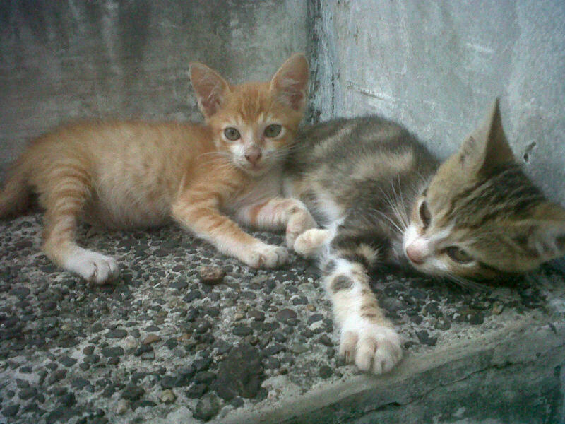 Keluarga Kucing Yulimar
