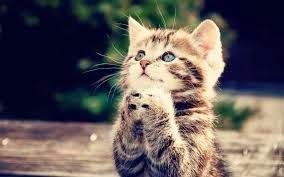 merawat kucing, kucing, muezza, kucing nabi,kucing sehat,cara merawat kucing