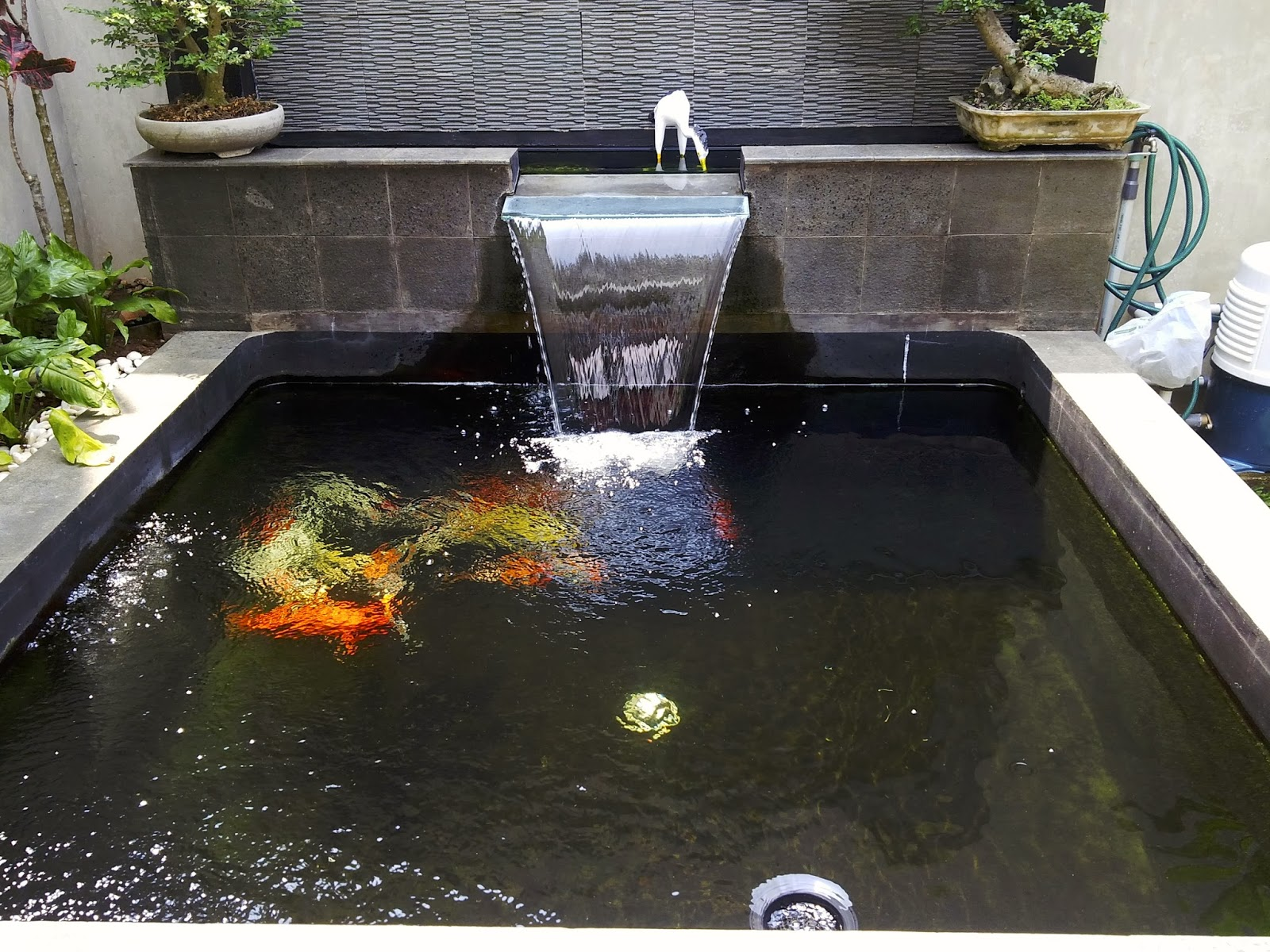Anoxic filtration system yogas s pond modifications and for Best filter system for small pond