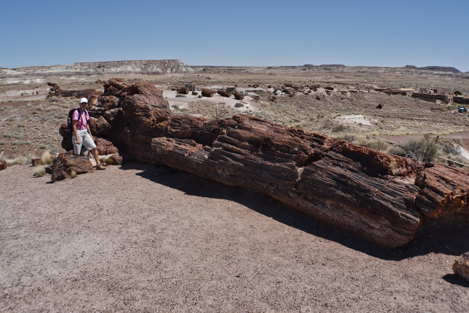 petrified forest natl pk women Ginkgo petrified forest state park/wanapum recreational area is a 7,470-acre (3,020 ha) which led to creation of the park as a national historic preserve.