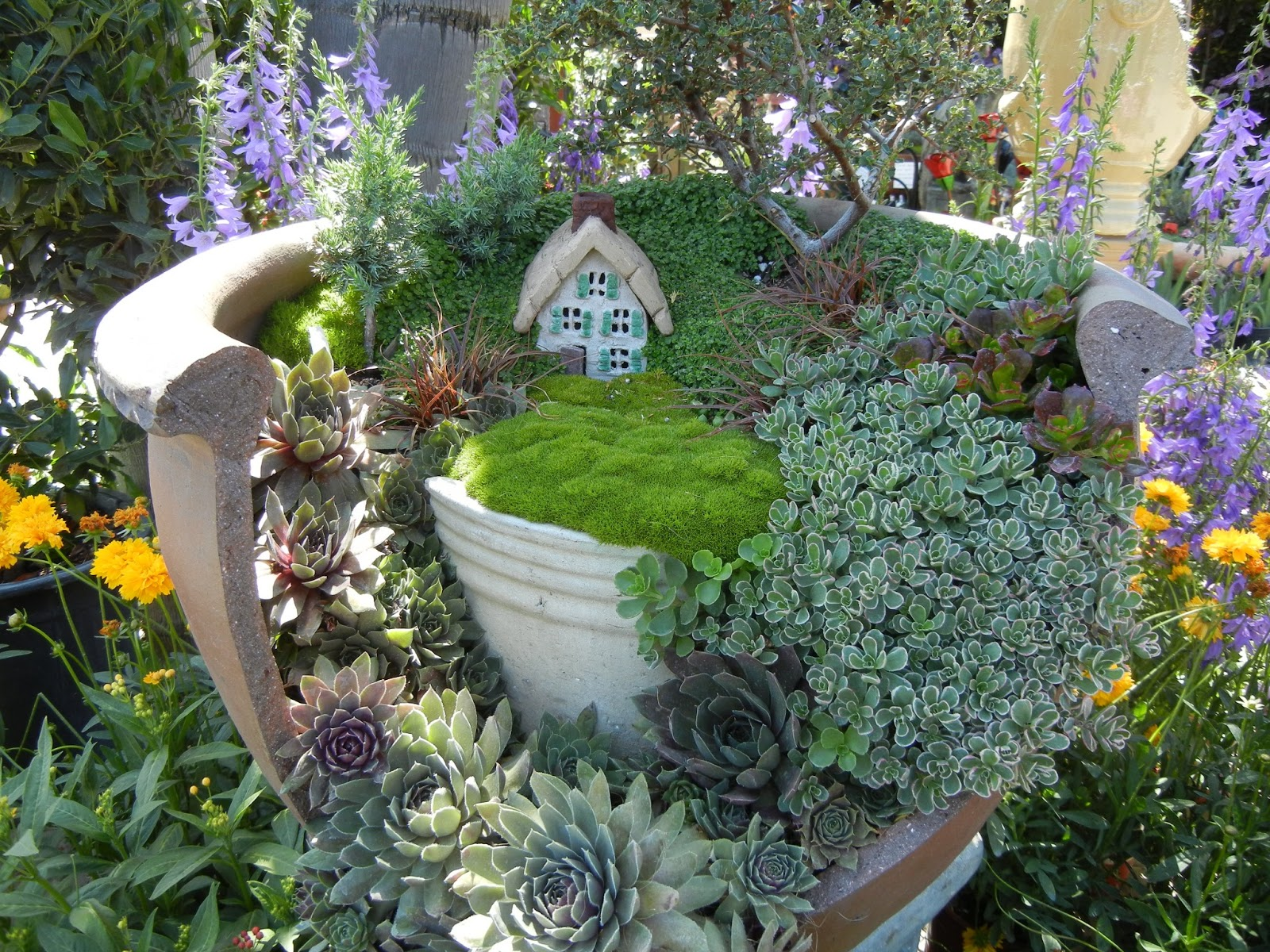 The second half who loves fairy gardens Fairy garden plants