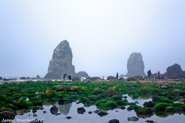 Cannon Beach Oregon Coast Tidepools Haystack Rock Jaime Weatherford