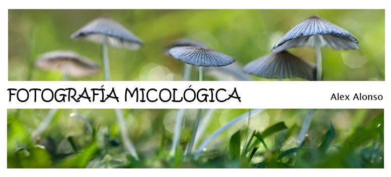 FOTOGRAFIA MICOLOGICA
