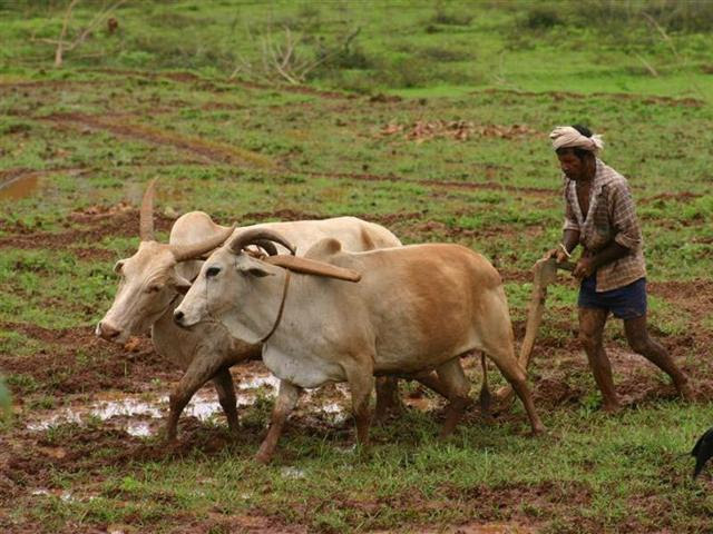 Farmers who went abroad are facing trouble to get insurance for their land and crops