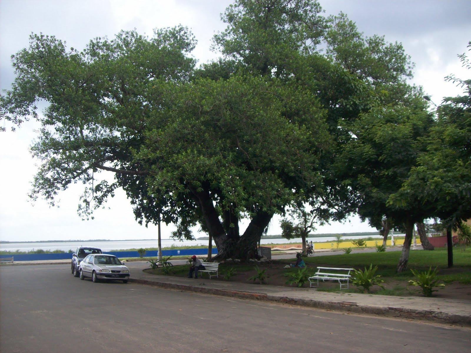 Aeroporto De Quelimane : Quelimane