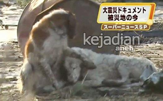 Kisah Kesetiaan Anjing yang Bikin Nangis