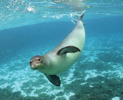 ¿Como beben los mamíferos marinos?