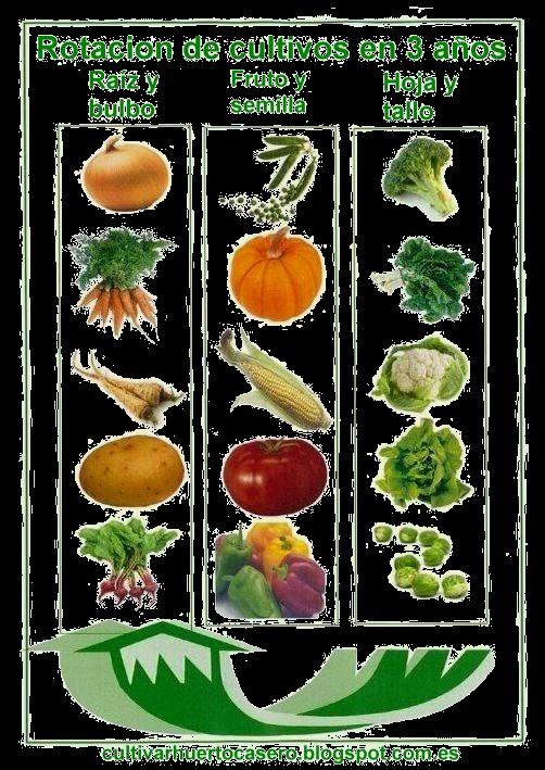 Rotacion de cultivos for Plantas hortalizas ejemplos