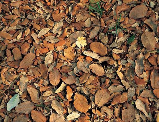 los suelos los suelos org nicos e inorg nicos
