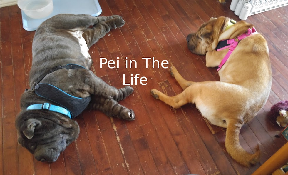 Pei In The Life
